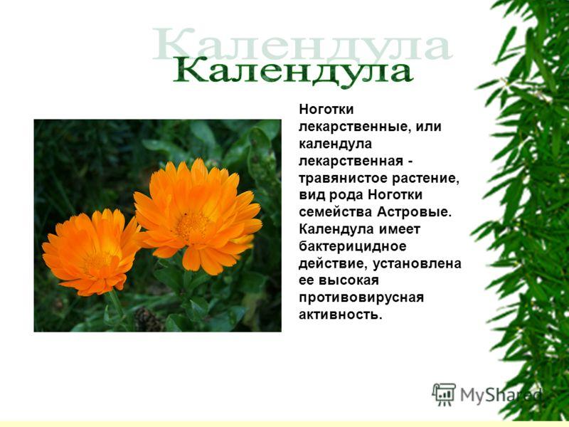 Ноготки лекарственные, или календула лекарственная - травянистое растение, вид рода Ноготки семейства Астровые. Календула имеет бактерицидное действие, установлена ее высокая противовирусная активность.