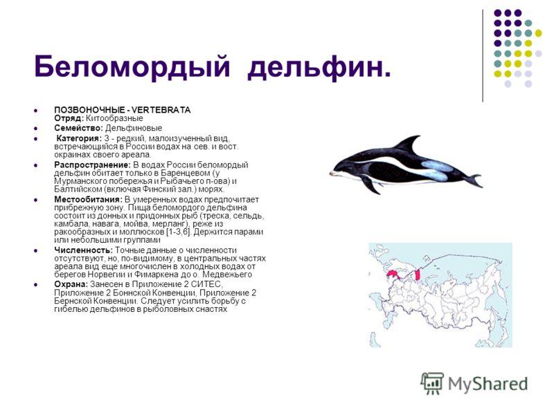 Беломордый дельфин. ПОЗВОНОЧНЫЕ - VERTEBRATA Отряд: Китообразные Семейство: Дельфиновые Категория: 3 - редкий, малоизученный вид, встречающийся в России водах на сев. и вост. окраинах своего ареала. Распространение: В водах России беломордый дельфин