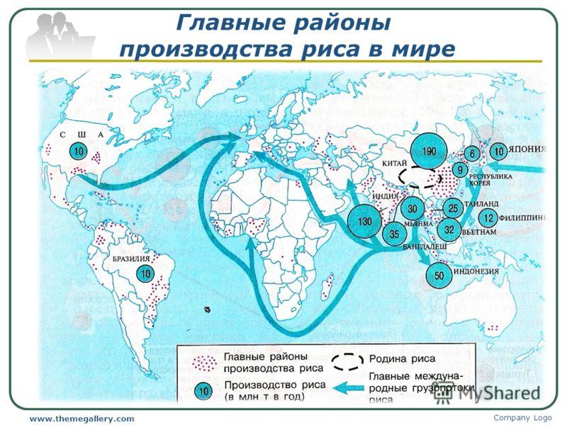 Главные районы производства риса в мире Company Logo www.themegallery.com