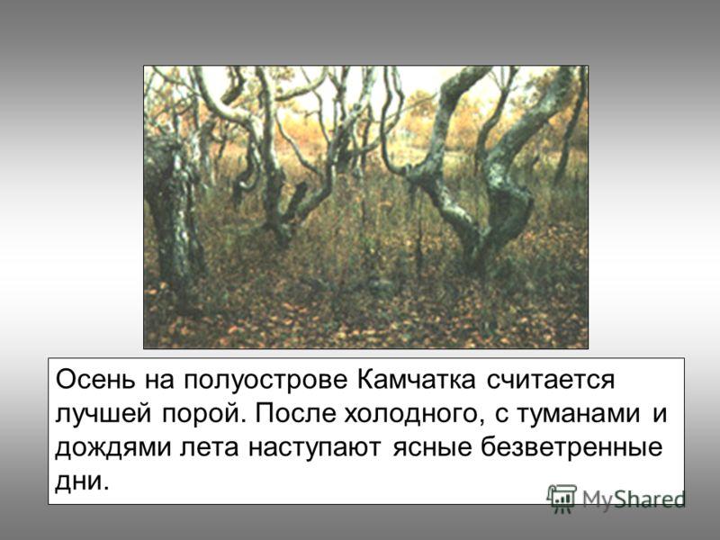 Осень на полуострове Камчатка считается лучшей порой. После холодного, с туманами и дождями лета наступают ясные безветренные дни.