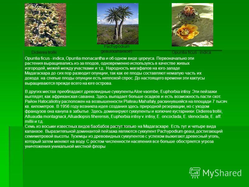 В других местах преобладают древовидные суккуленты Aloe vaombe, Euphorbia intisy. Эти пейзажи выглядят, как африканская саванна. Здесь выпадает больше осадков и есть возможность пасти скот. Район Hatocaliotsy расположен на возвышенности Plateau Mahaf