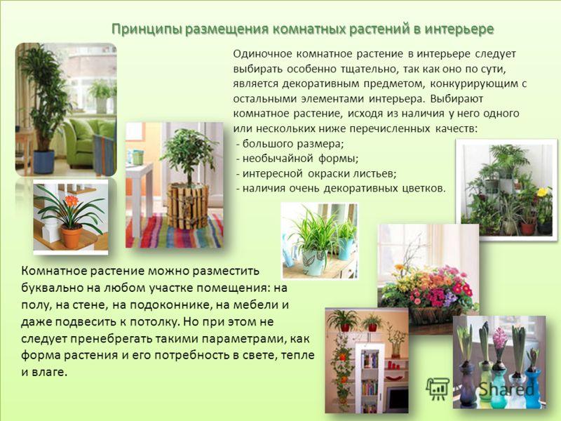 Принципы размещения комнатных растений в интерьере Одиночное комнатное растение в интерьере следует выбирать особенно тщательно, так как оно по сути, является декоративным предметом, конкурирующим с остальными элементами интерьера. Выбирают комнатное