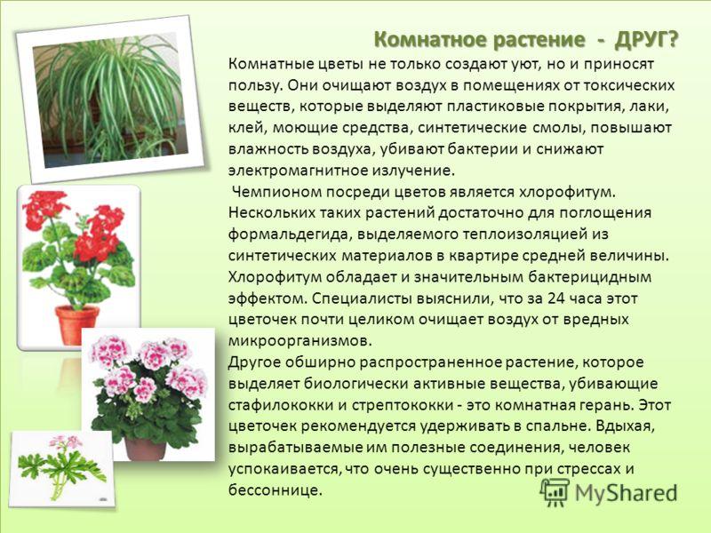 Комнатное растение - ДРУГ? Комнатные цветы не только создают уют, но и приносят пользу. Они очищают воздух в помещениях от токсических веществ, которые выделяют пластиковые покрытия, лаки, клей, моющие средства, синтетические смолы, повышают влажност