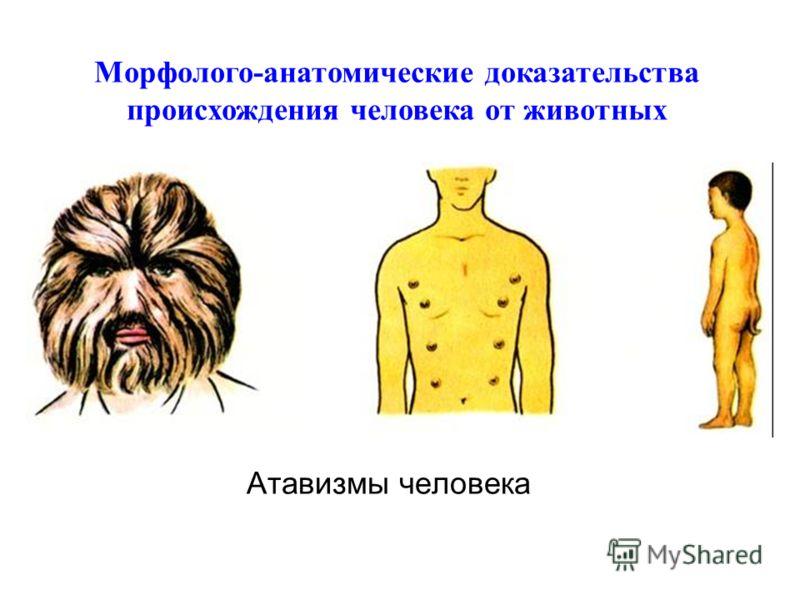 Атавизмы человека Морфолого-анатомические доказательства происхождения человека от животных