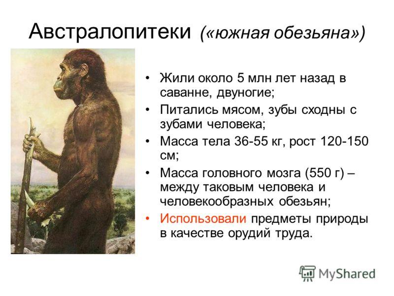 Австралопитеки («южная обезьяна») Жили около 5 млн лет назад в саванне, двуногие; Питались мясом, зубы сходны с зубами человека; Масса тела 36-55 кг, рост 120-150 см; Масса головного мозга (550 г) – между таковым человека и человекообразных обезьян;