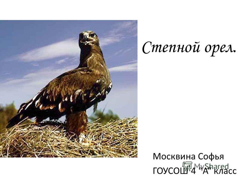 Степной орел. Москвина Софья ГОУСОШ 4 А класс