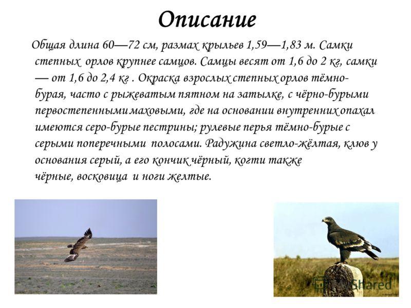 Описание Общая длина 6072 см, размах крыльев 1,591,83 м. Самки степных орлов крупнее самцов. Самцы весят от 1,6 до 2 кг, самки от 1,6 до 2,4 кг. Окраска взрослых степных орлов тёмно- бурая, часто с рыжеватым пятном на затылке, с чёрно-бурыми первосте