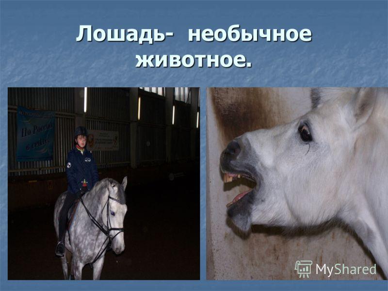 Лошадь- необычное животное.