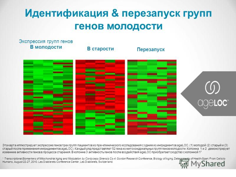 Идентификация & перезапуск групп генов молодости В старости Экспрессия групп генов В молодости Перезапуск Эта карта иллюстрирует экспрессию генов трех групп пациентов из пре-клинического исследования с одним из ингредиентов ageLOC. (1) молодой (2) ст