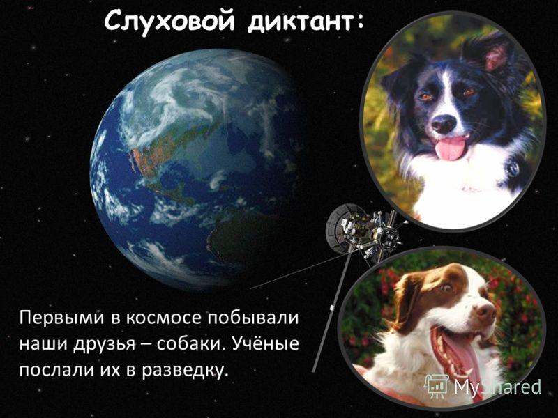 Слуховой диктант: Первыми в космосе побывали наши друзья – собаки. Учёные послали их в разведку.