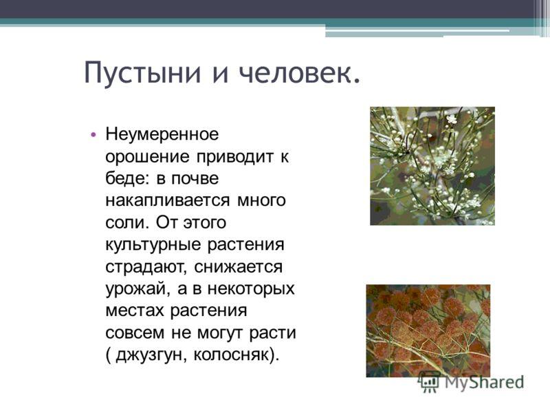 Пустыни и человек. Неумеренное орошение приводит к беде: в почве накапливается много соли. От этого культурные растения страдают, снижается урожай, а в некоторых местах растения совсем не могут расти ( джузгун, колосняк).