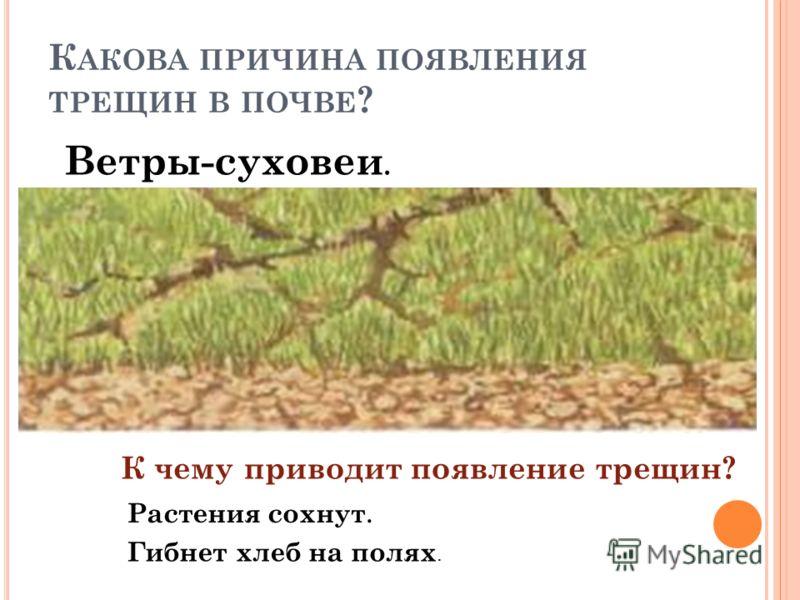 К АКОВА ПРИЧИНА ПОЯВЛЕНИЯ ТРЕЩИН В ПОЧВЕ ? Ветры-суховеи. К чему приводит появление трещин? Растения сохнут. Гибнет хлеб на полях.