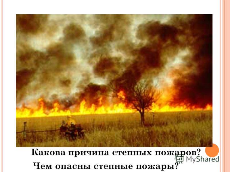 Чем опасны степные пожары? Какова причина степных пожаров?
