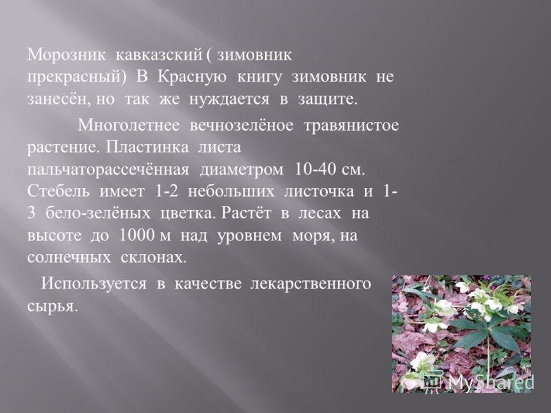 Морозник кавказский ( зимовник прекрасный ) В Красную книгу зимовник не занесён, но так же нуждается в защите. Многолетнее вечнозелёное травянистое растение. Пластинка листа пальчаторассечённая диаметром 10-40 см. Стебель имеет 1-2 небольших листочка