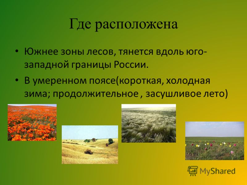 Где расположена Южнее зоны лесов, тянется вдоль юго- западной границы России. В умеренном поясе(короткая, холодная зима; продолжительное, засушливое лето)