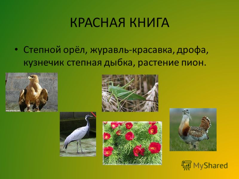 КРАСНАЯ КНИГА Степной орёл, журавль-красавка, дрофа, кузнечик степная дыбка, растение пион.