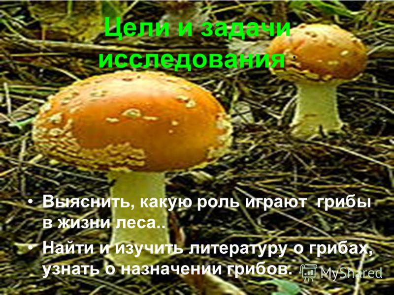 Цели и задачи исследования : Выяснить, какую роль играют грибы в жизни леса.. Найти и изучить литературу о грибах, узнать о назначении грибов.