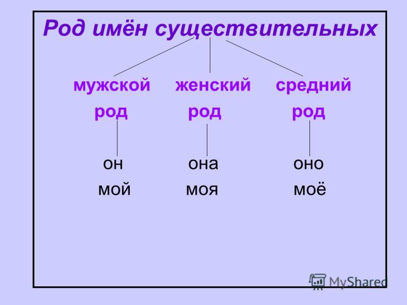 Род имён существительных мужской женский средний род род род он она оно мой моя моё