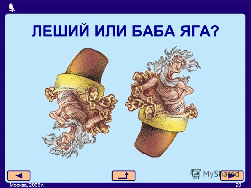 ЛЕШИЙ ИЛИ БАБА ЯГА? Москва, 2006 г.20