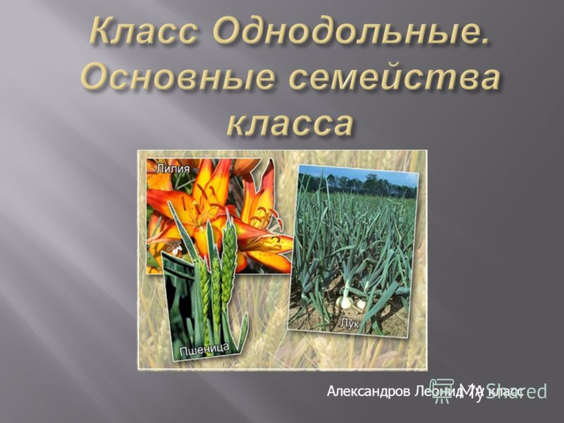 Александров Леонид 7А класс