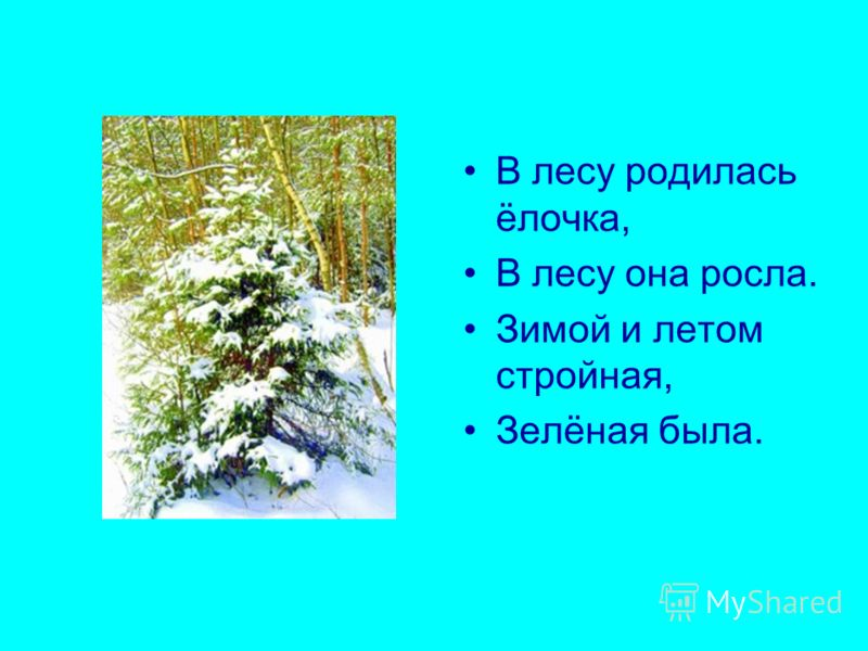 В лесу родилась ёлочка, В лесу она росла. Зимой и летом стройная, Зелёная была.