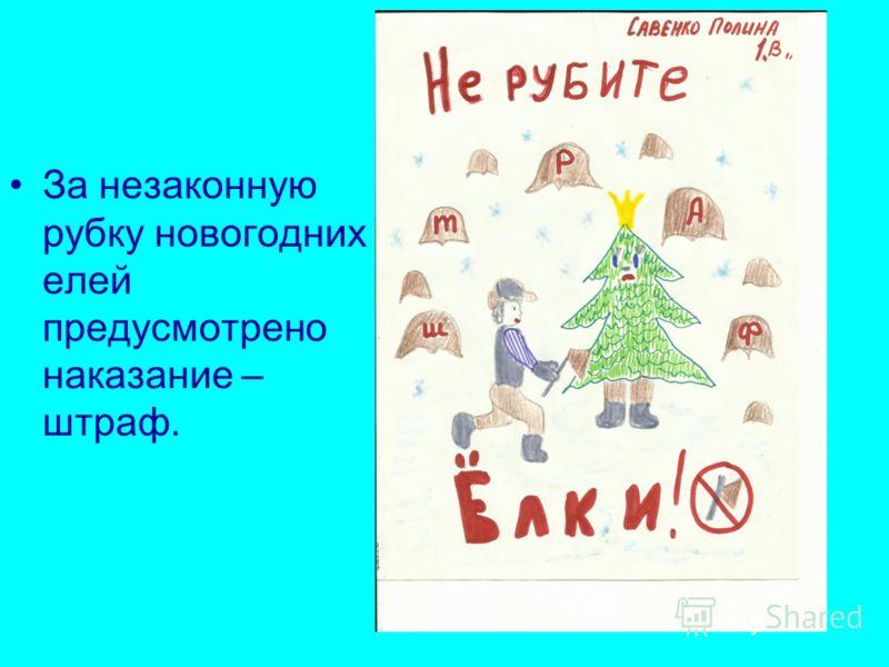 За незаконную рубку новогодних елей предусмотрено наказание – штраф.
