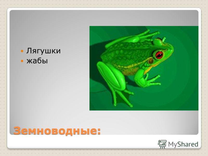 Земноводные: Лягушки жабы