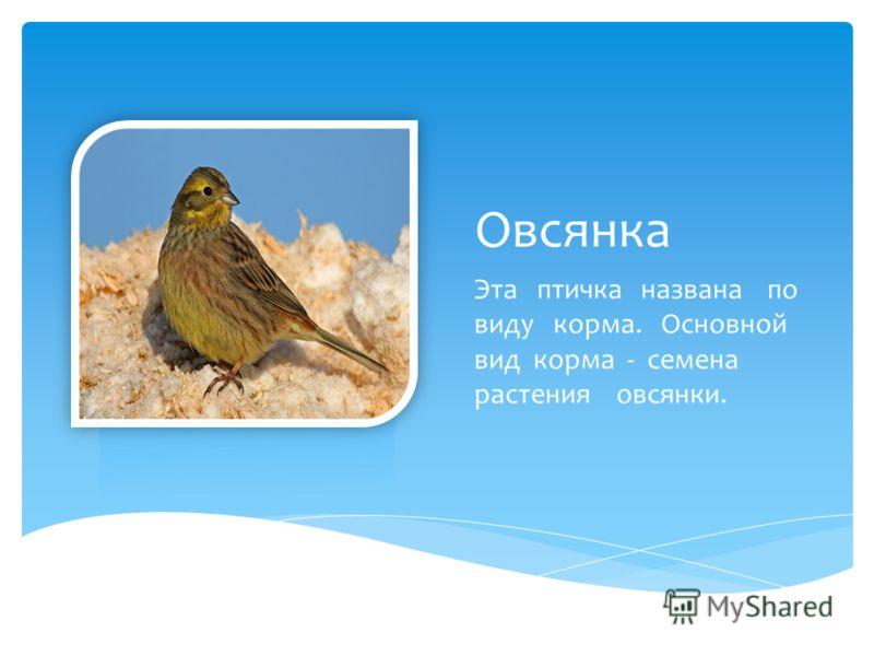 Овсянка Эта птичка названа по виду корма. Основной вид корма - семена растения овсянки.