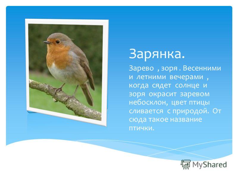 Зарянка. Зарево, зоря. Весенними и летними вечерами, когда сядет солнце и зоря окрасит заревом небосклон, цвет птицы сливается с природой. От сюда такое название птички.
