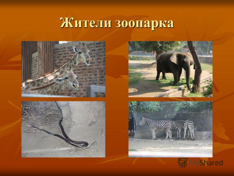 Жители зоопарка