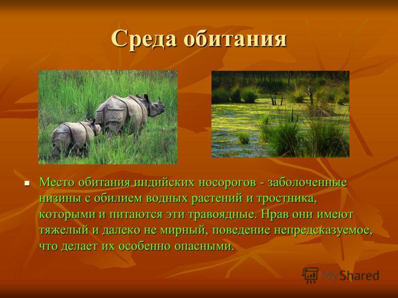 Среда обитания Место обитания индийских носорогов - заболоченные низины с обилием водных растений и тростника, которыми и питаются эти травоядные. Нрав они имеют тяжелый и далеко не мирный, поведение непредсказуемое, что делает их особенно опасными.