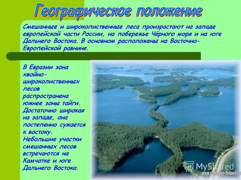 Смешанные и широколиственные леса произрастают на западе европейской части России, на побережье Чёрного моря и на юге Дальнего Востока. В основном расположены на Восточно- Европейской равнине. В Евразии зона хвойно- широколиственных лесов распростран