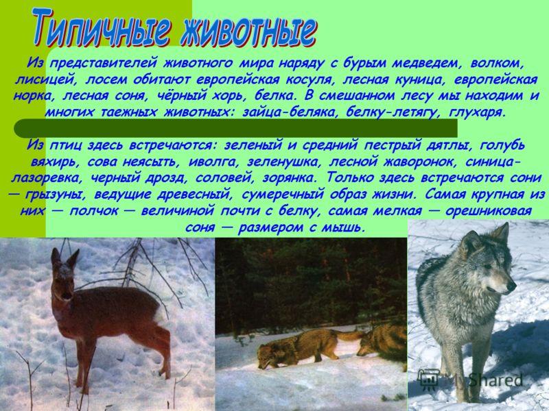 Из представителей животного мира наряду с бурым медведем, волком, лисицей, лосем обитают европейская косуля, лесная куница, европейская норка, лесная соня, чёрный хорь, белка. В смешанном лесу мы находим и многих таежных животных: зайца-беляка, белку