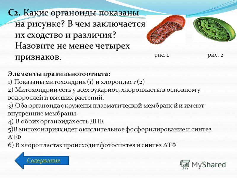 C2. Какие органоиды показаны на рисунке? В чем заключается их сходство и различия? Назовите не менее четырех признаков. рис. 1рис. 2 Элементы правильного ответа: 1) Показаны митохондрия (1) и хлоропласт (2) 2) Митохондрии есть у всех эукариот, хлороп