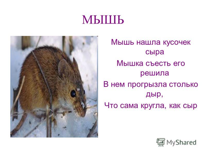 МЫШЬ Мышь нашла кусочек сыра Мышка съесть его решила В нем прогрызла столько дыр, Что сама кругла, как сыр