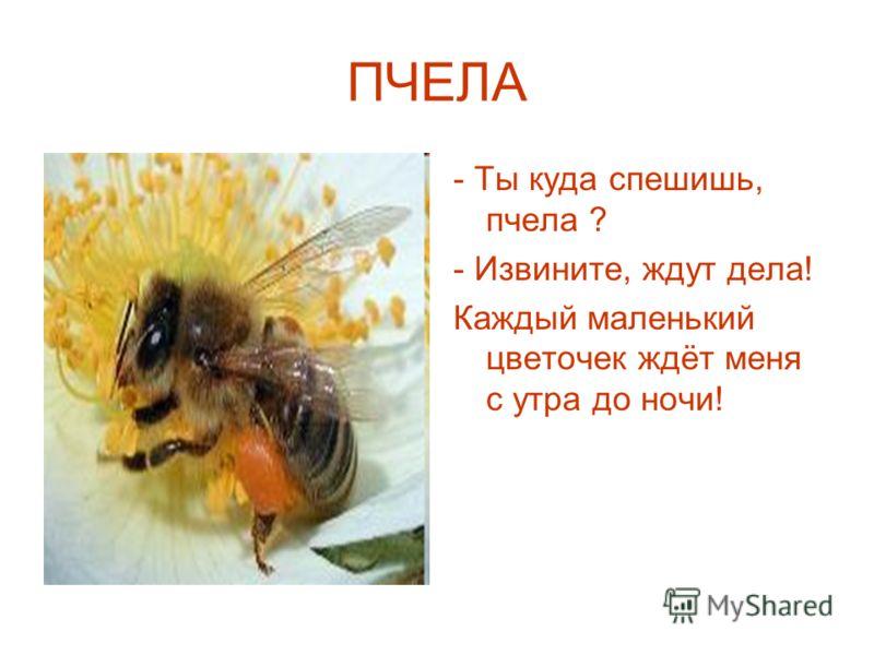 ПЧЕЛА - Ты куда спешишь, пчела ? - Извините, ждут дела! Каждый маленький цветочек ждёт меня с утра до ночи!