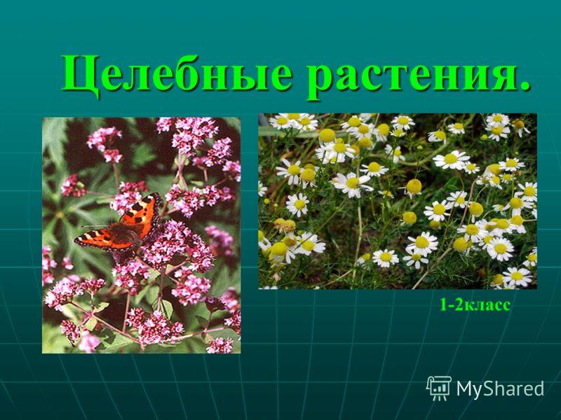 Целебные растения. 1-2класс