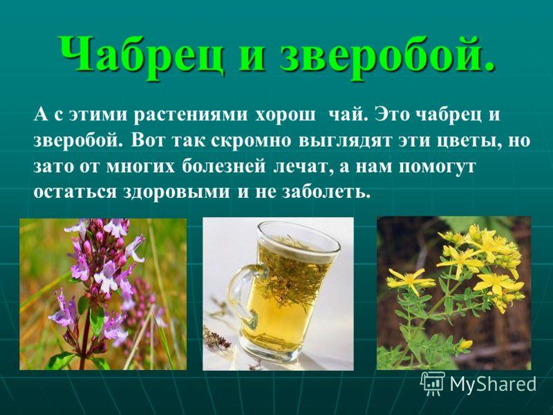 Чабрец и зверобой. А с этими растениями хорош чай. Это чабрец и зверобой. Вот так скромно выглядят эти цветы, но зато от многих болезней лечат, а нам помогут остаться здоровыми и не заболеть.