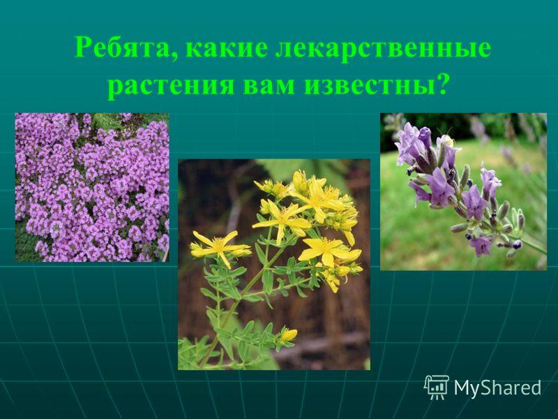 Ребята, какие лекарственные растения вам известны?
