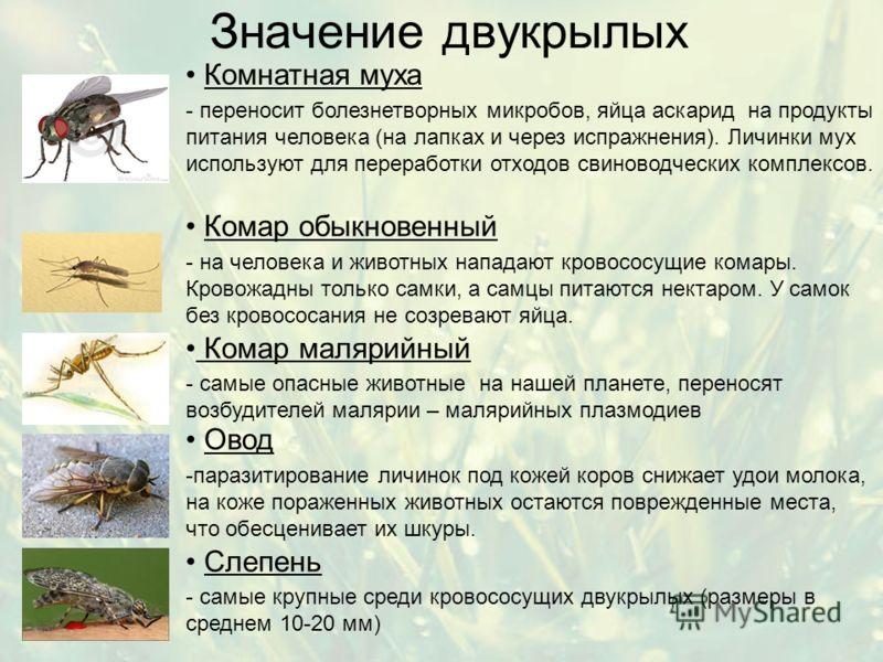 Значение двукрылых Комнатная муха - переносит болезнетворных микробов, яйца аскарид на продукты питания человека (на лапках и через испражнения). Личинки мух используют для переработки отходов свиноводческих комплексов. Комар малярийный - самые опасн