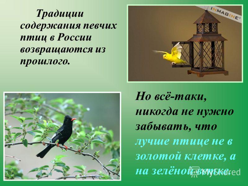 Традиции содержания певчих птиц в России возвращаются из прошлого. Но всё-таки, никогда не нужно забывать, что лучше птице не в золотой клетке, а на зелёной ветке.