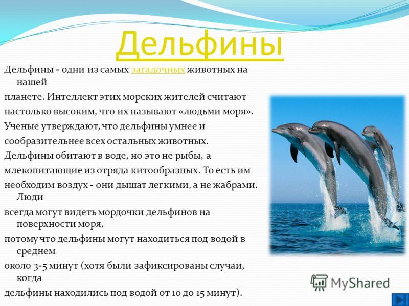 Дельфины Дельфины - одни из самых загадочных животных на нашейзагадочных планете. Интеллект этих морских жителей считают настолько высоким, что их называют «людьми моря». Ученые утверждают, что дельфины умнее и сообразительнее всех остальных животных