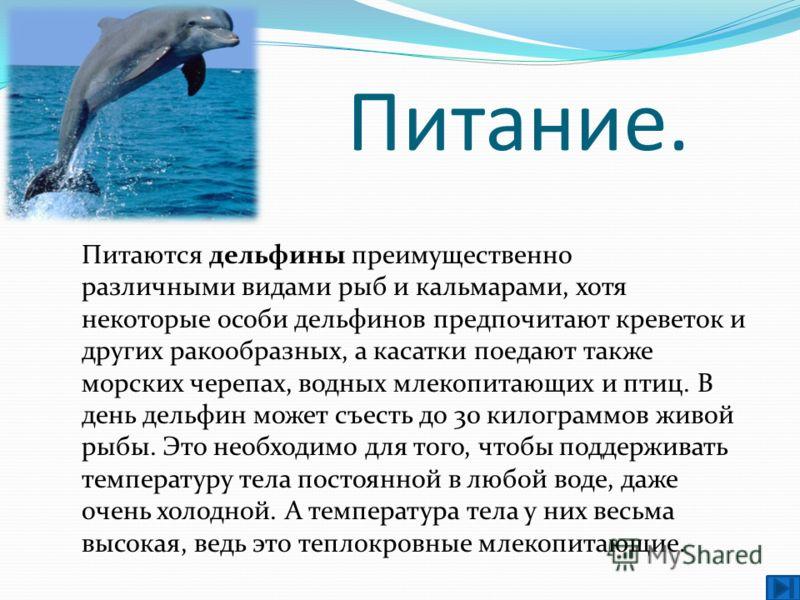 Питание. Питаются дельфины преимущественно различными видами рыб и кальмарами, хотя некоторые особи дельфинов предпочитают креветок и других ракообразных, а касатки поедают также морских черепах, водных млекопитающих и птиц. В день дельфин может съес