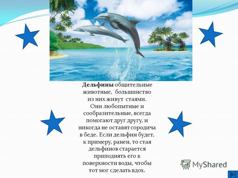 Дельфины общительные животные, большинство из них живут стаями. Они любопытные и сообразительные, всегда помогают друг другу, и никогда не оставят сородича в беде. Если дельфин будет, к примеру, ранен, то стая дельфинов старается приподнять его к пов