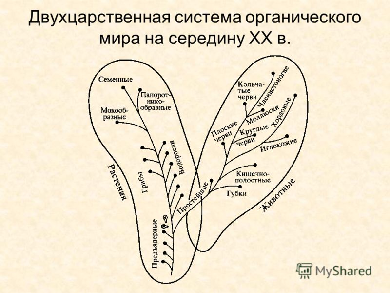 Двухцарственная система органического мира на середину ХХ в.