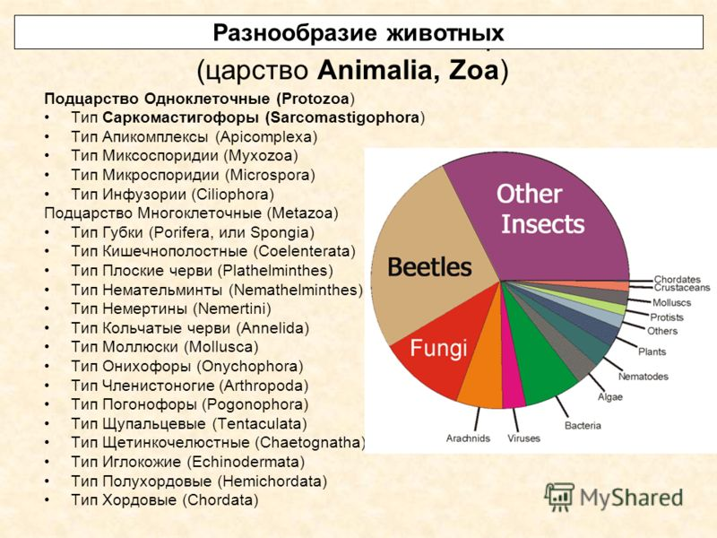 Система животного мира (царство Animalia, Zoa) Подцарство Одноклеточные (Protozoa) Тип Саркомастигофоры (Sarcomastigophora) Тип Апикомплексы (Apicomplexa) Тип Миксоспоридии (Myxozoa) Тип Микроспоридии (Microspora) Тип Инфузории (Ciliophora) Подцарств