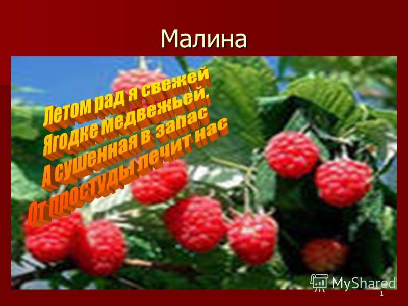 1 Малина