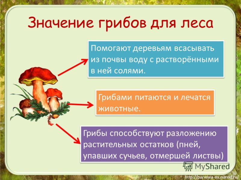 Значение грибов для леса Помогают деревьям всасывать из почвы воду с растворёнными в ней солями. Помогают деревьям всасывать из почвы воду с растворёнными в ней солями. Грибами питаются и лечатся животные. Грибами питаются и лечатся животные. Грибы с