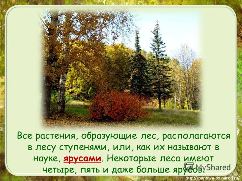 Все растения, образующие лес, располагаются в лесу ступенями, или, как их называют в науке, ярусами. Некоторые леса имеют четыре, пять и даже больше ярусов.