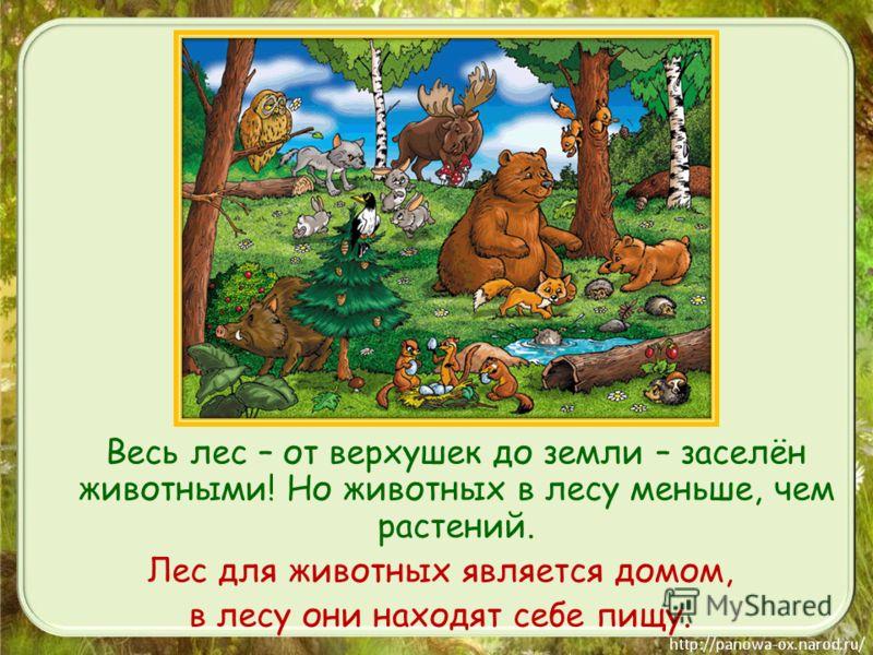Весь лес – от верхушек до земли – заселён животными! Но животных в лесу меньше, чем растений. Лес для животных является домом, в лесу они находят себе пищу.